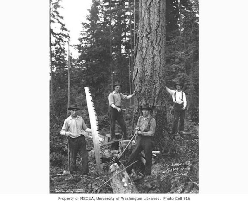 Falling crew and speeder, Pacific National Lumber Company