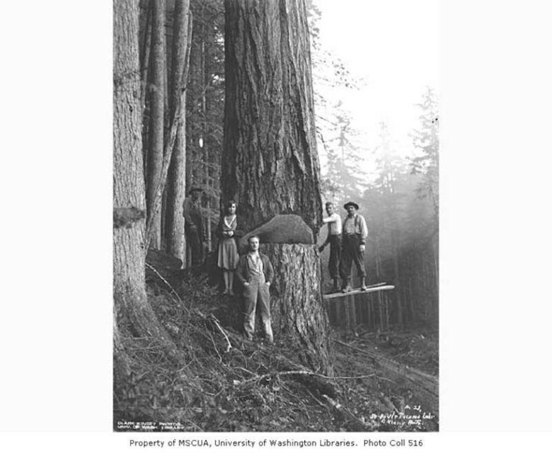 Fallers and woman beside tree, St. Paul and Tacoma Lumber Company
