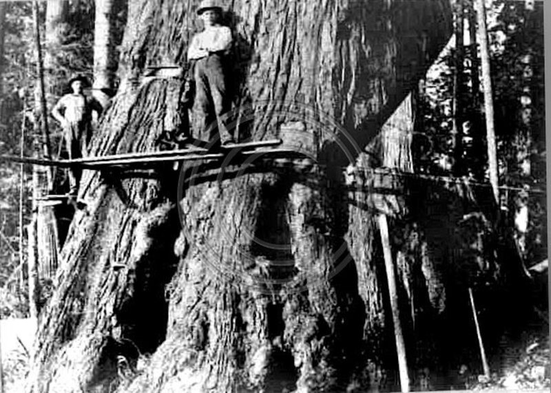 Woodsmen stop for a photo while standing on spring boards.