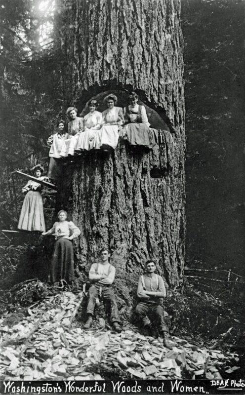 Washington's Wonderful Woods and Women.