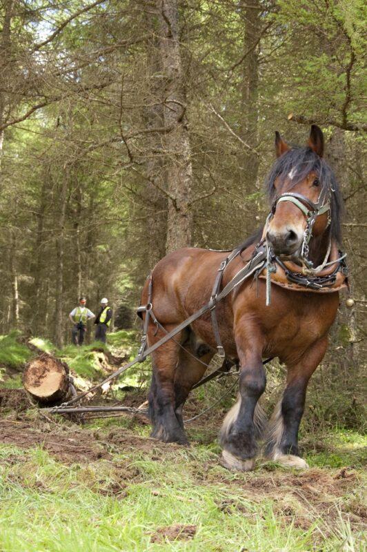 Horse logging.