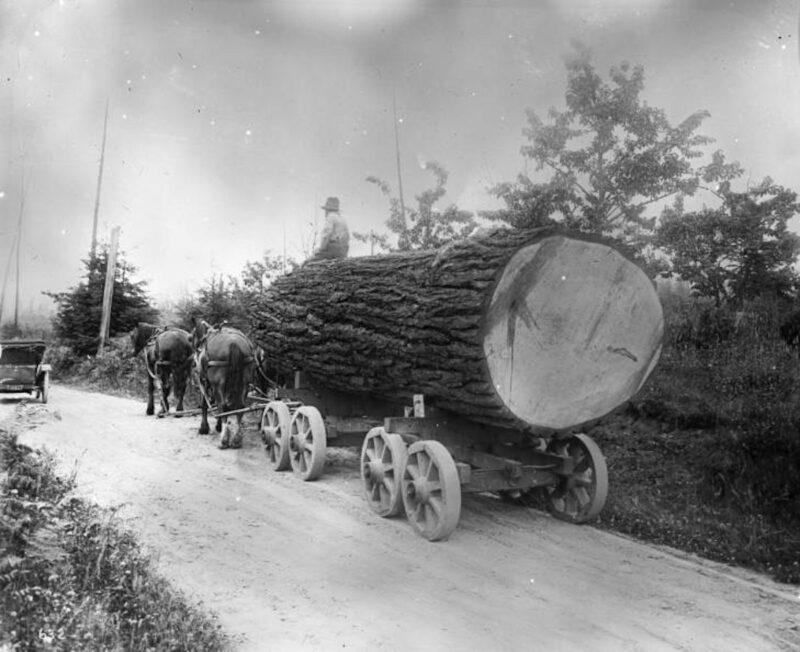 Horses hauling large log on wagon.