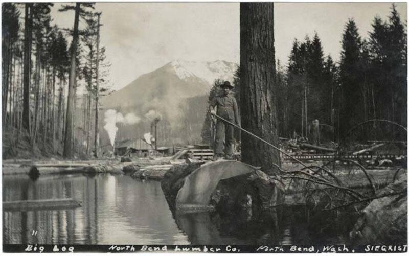 1910 Big log, North Bend Lumber Co., Washington, CA.